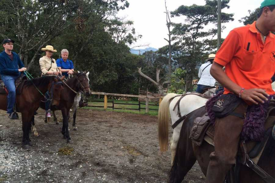 Medellin City Tours BoGo Tour: 	BOOK HORSE RIDE AND GET FREE CHRISTMAS TOUR