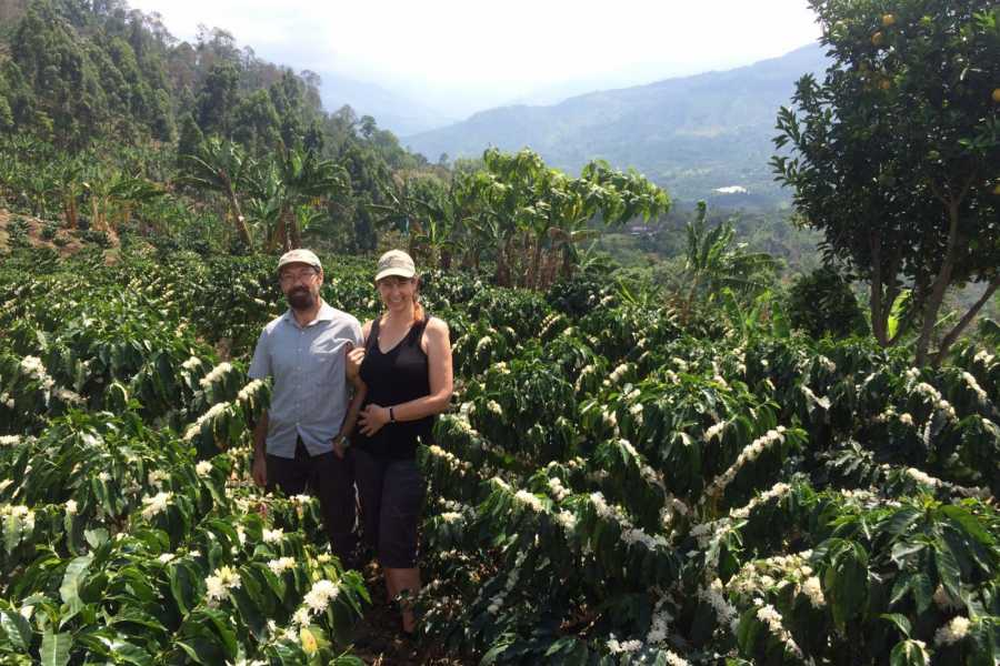 Medellin City Services BoGo Tour: 	BOOK JARDIN COFFEE TOUR AND GET A FREE CHRISTMAS TOUR