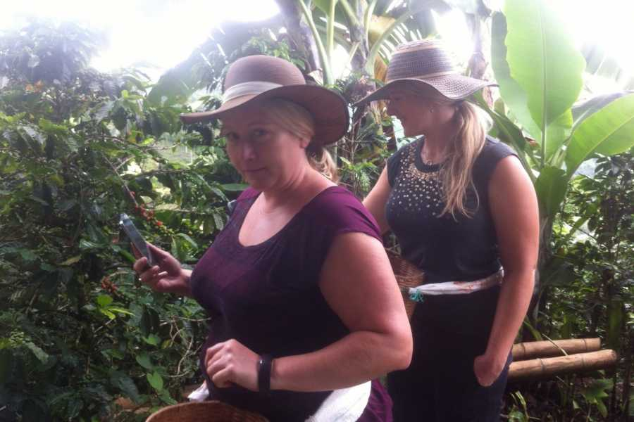 Medellin City Services BoGo Tour: 	BOOK JERICO COFFEE TOUR AND GET A FREE CHRISTMAS TOUR