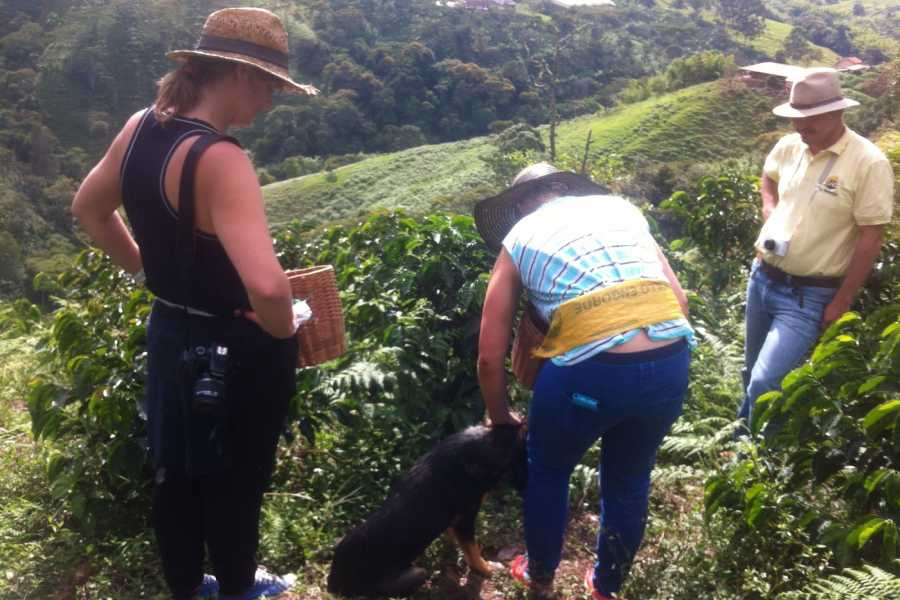 Medellin City Tours SHARED PALMITAS COFFEE TOUR