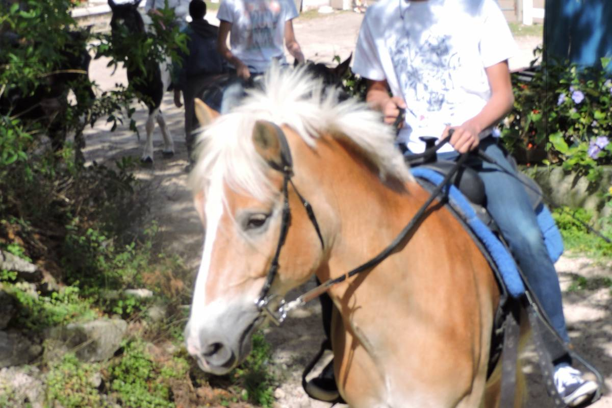 Spicelands Equestrian Center Scenic Trail Ride