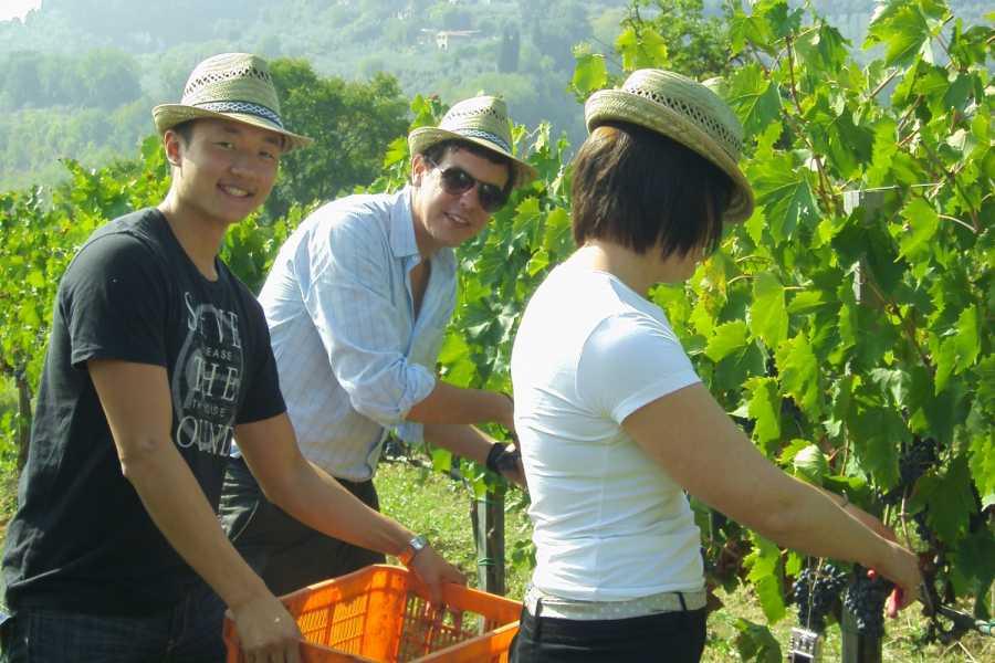 Tuscany on a Budget tours HARVEST TOUR