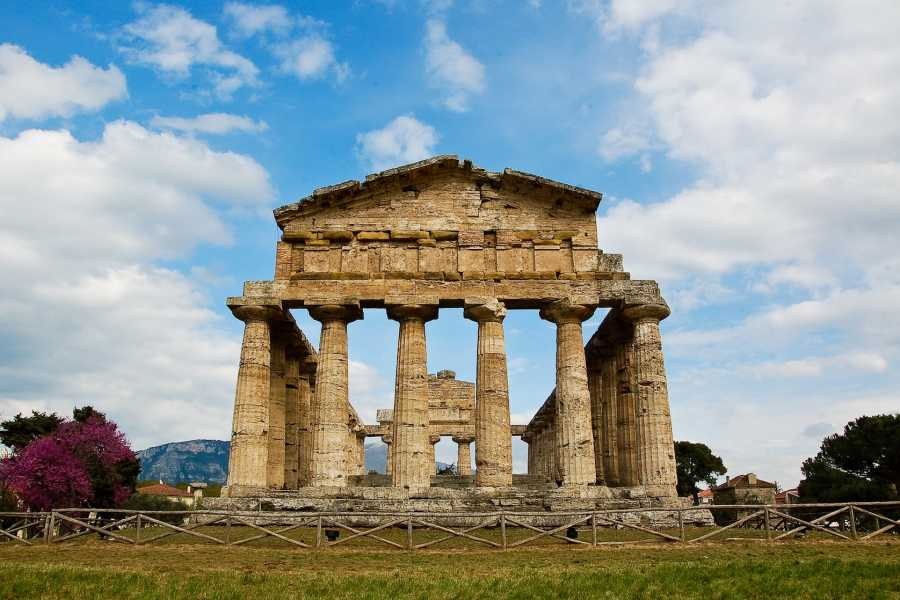 Travel etc Paestum & Buffalo Farm