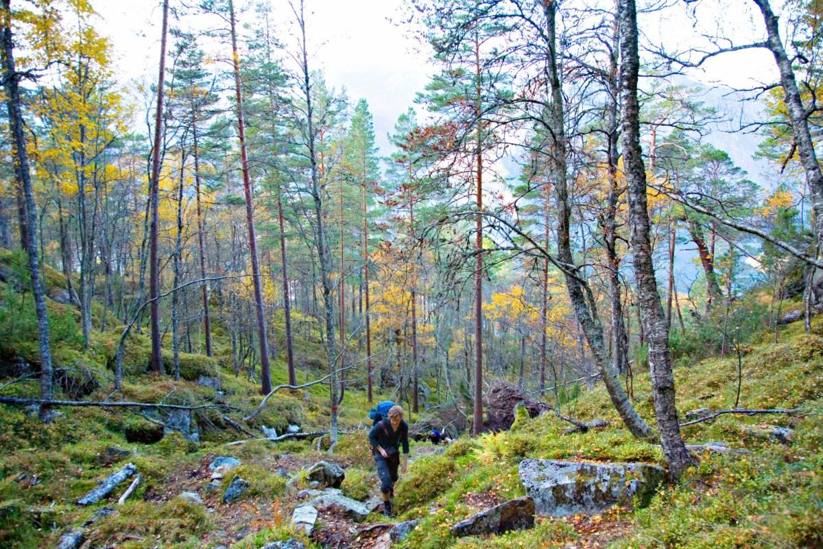 Åkrafjorden Oppleving AS Langfoss topptur - guidet dagstur