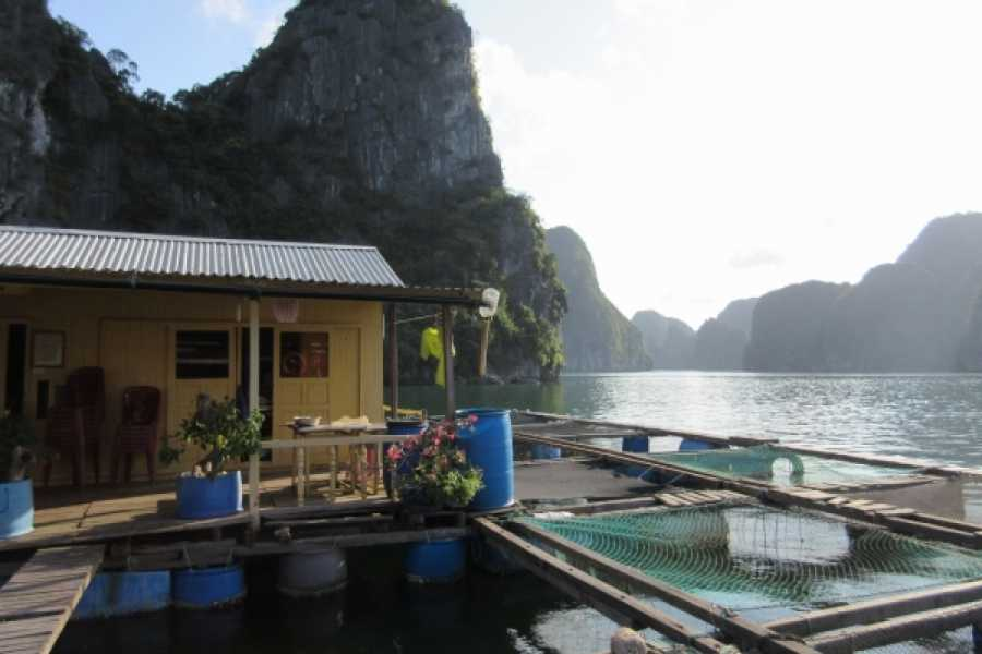 Vietnam 24h Tour The Real Halong Bay Private Cruise Experience 3D2N | Option B
