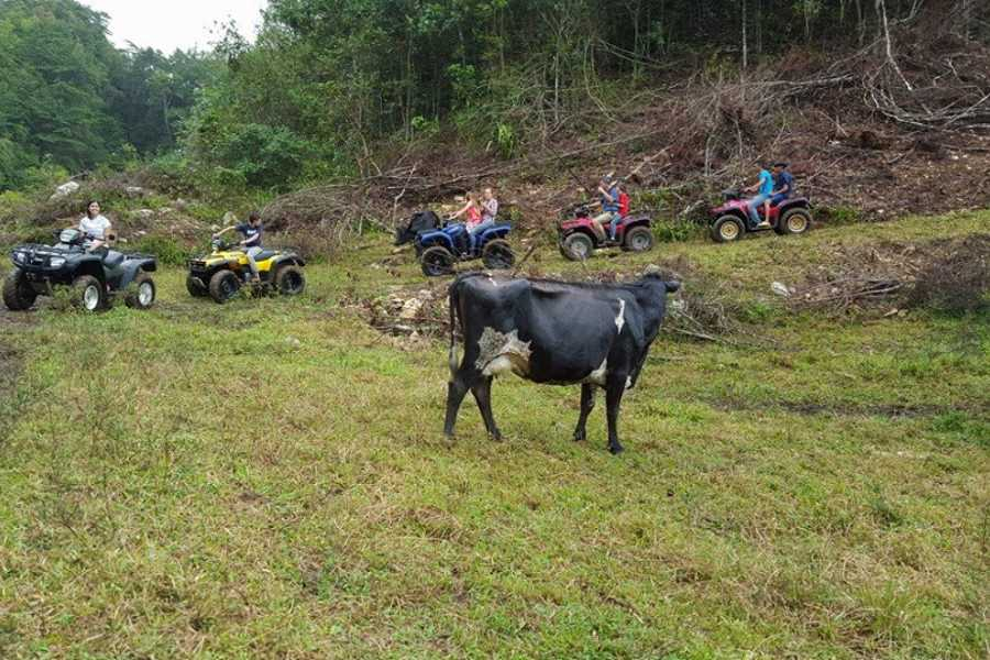 MyVacationButlers.Com ATV Farm Adventure - Utuado PR