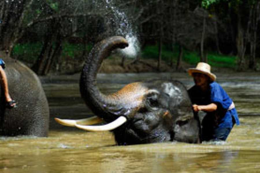 Vietnam 24h Tour Elephant Village and Mahout Experience Day Tour