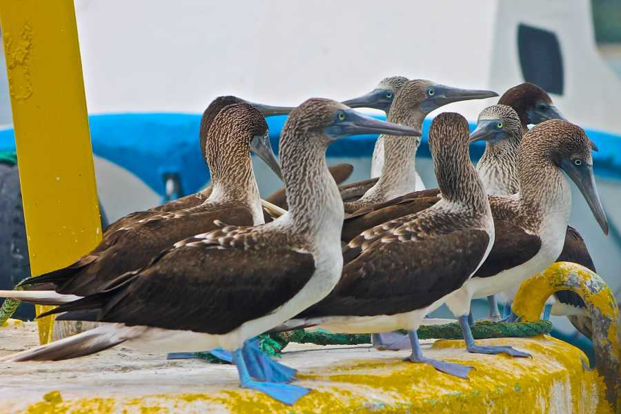 PALO SANTO TRAVEL Isla de la Plata | Meeresschildkröten| schnorcheln | Puerto Lopez