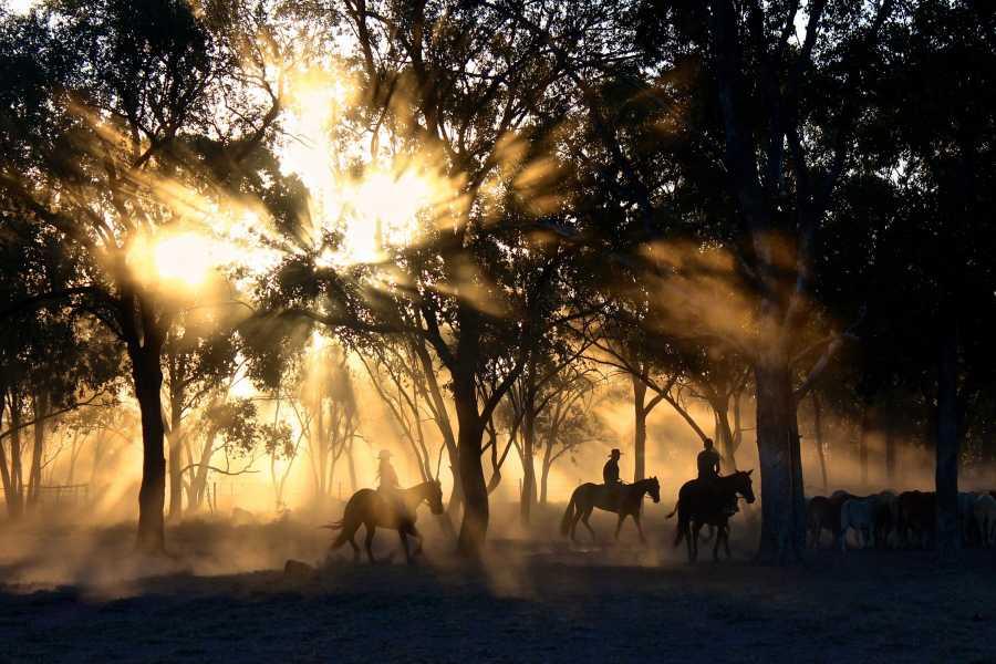 Congo Trail Canopy Tour Horseback Riding Tours