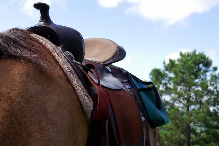 CongoCanopy.com Horseback Riding Tours