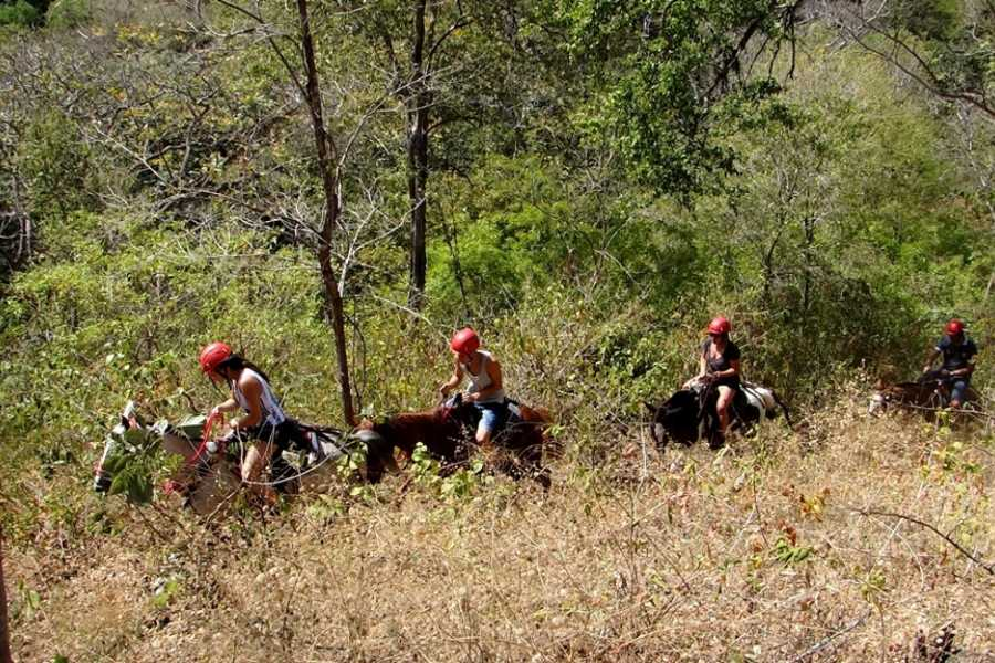 CongoCanopy.com Horseback Riding Tours