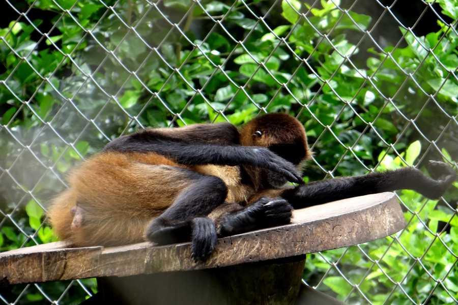CongoCanopy.com Monkey Sanctuary