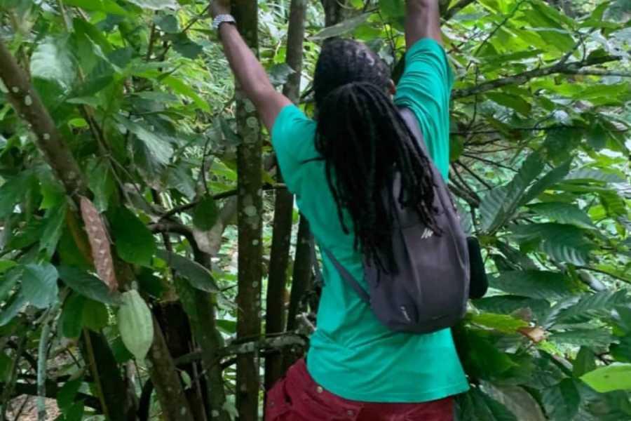 Eco Adventures Saint Lucia Tours Sapphire Falls & Jungle Spa Hike