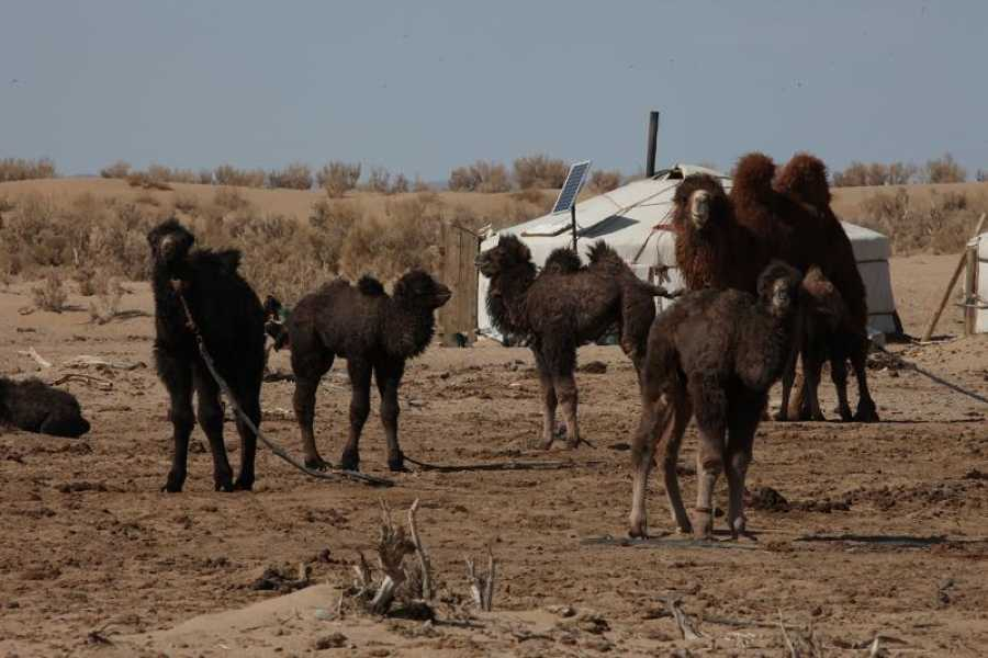 Mongolia Goes Global Steppe and Desert