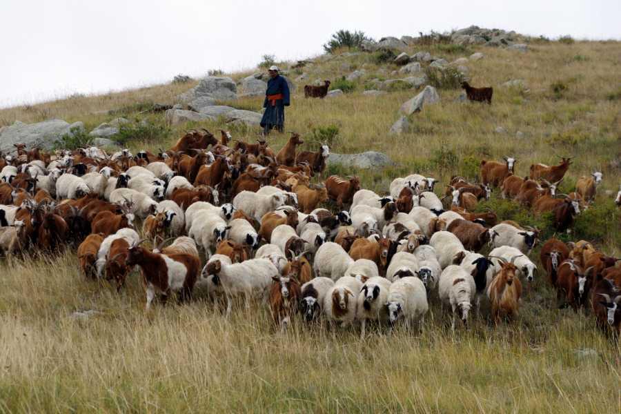 Mongolia Goes Global 3. Heritage of Nomads