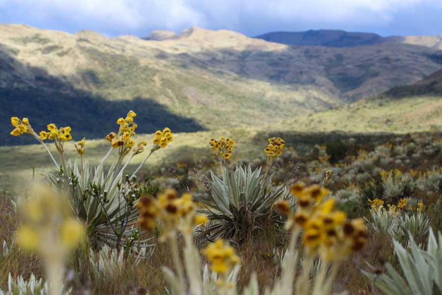 Andes Ecotours Chingaza Wildlife Páramo Adventure U$130