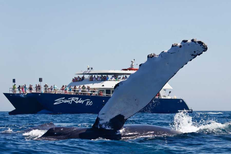 Pacifico Tours SA de CV Whale Watching Brunch