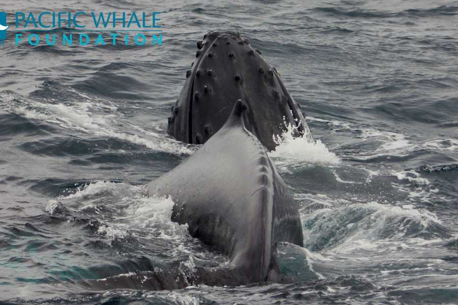 PALO SANTO TRAVEL WHALE WATCHING IN ISLA DE LA PLATA - ECUADOR - JUNE TO OCTOBER