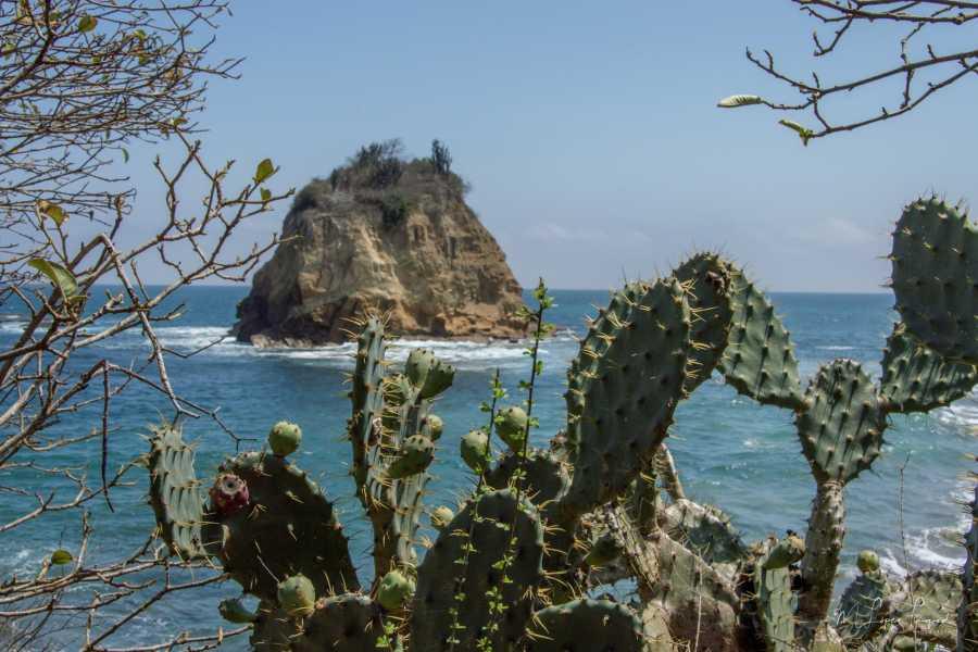 PALO SANTO TRAVEL PLAYA LOS FRAILES | AGUA BLANCA | PUERTO LÓPEZ  | MACHALILLA | ECUADOR