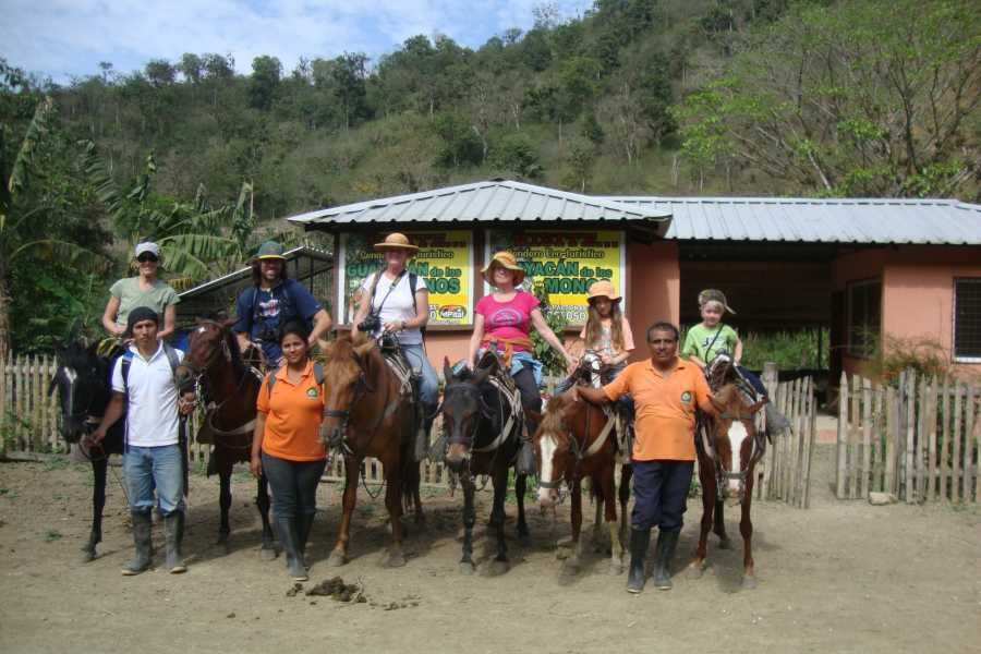 PALO SANTO TRAVEL RAINFOREST TOUR | BIRDS | HORSES AND TREKKING | MACHALILLA PARK