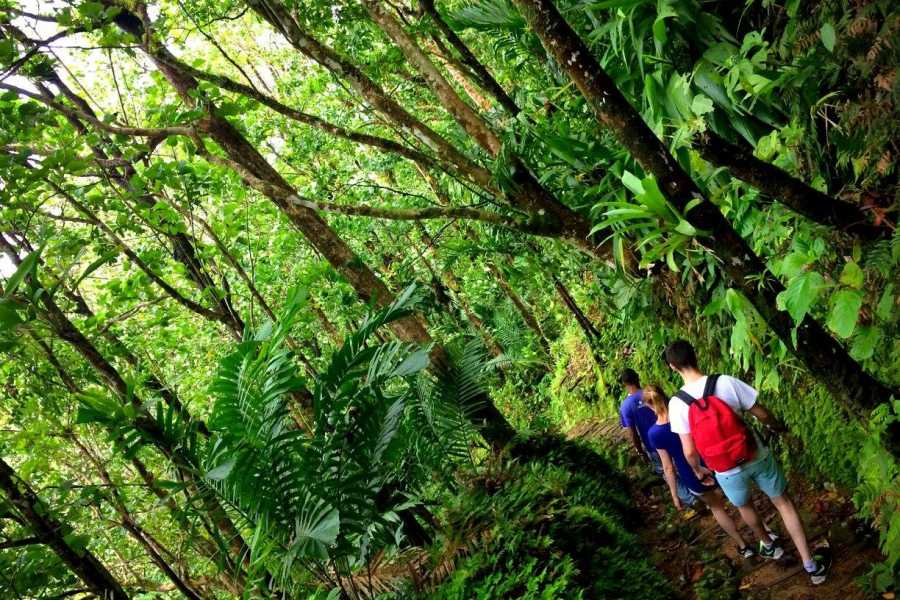 Eco Adventures Saint Lucia Tours St. Lucia Bird Watching Adventures
