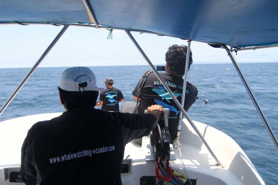 PALO SANTO TRAVEL VOLUNTEER IN WHALE RESEARCH PROGRAM IN ECUADOR