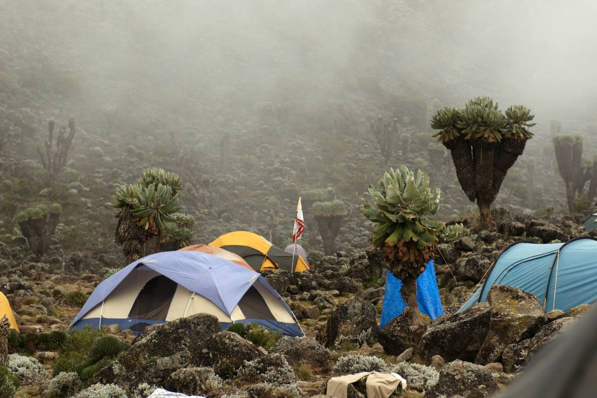 Wild-Trails Kilimanjaro on the Machame Route Adventure