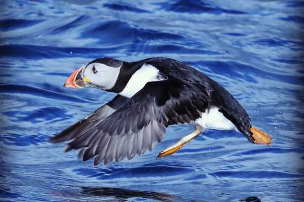 2.5h Whales & Wildlife Cruise, from Gairloch