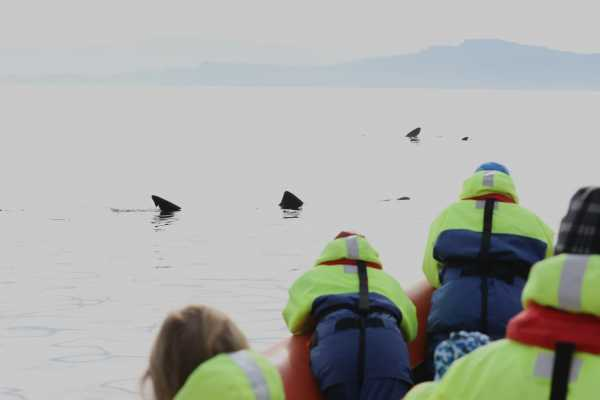4h Ultimate Orca 1 Cruise, from Gairloch