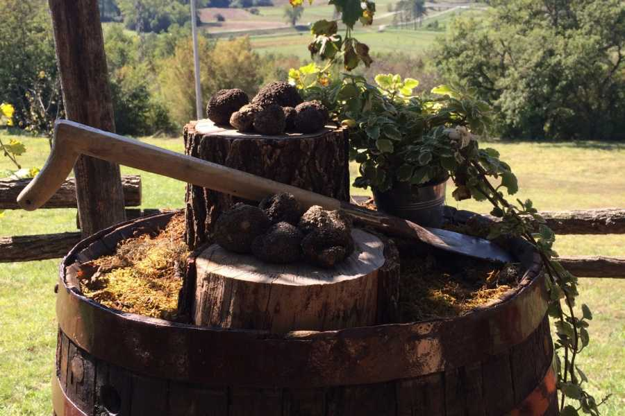 Nature Trips Truffle Experience in Istria