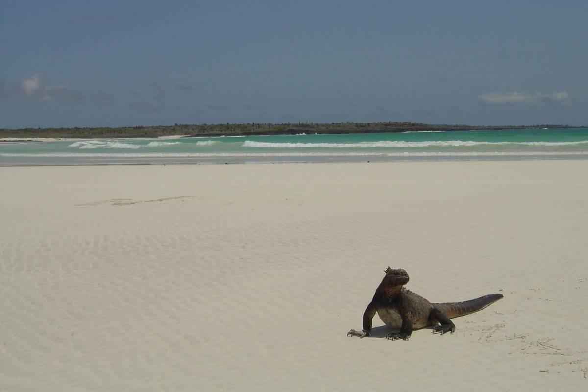 Gray Line Ecuador Excursion to Tortuga Beach & Bay Tour