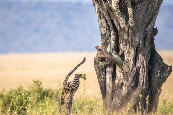 10 Days Serengeti Wildbeest Migration Safari