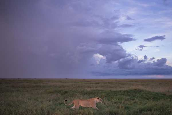 10 Days Tanzania Luxury Sky Safari
