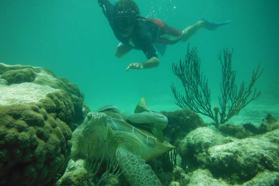 Cancun Vacation Experts AVENTURA DE ESNÓRQUEL
