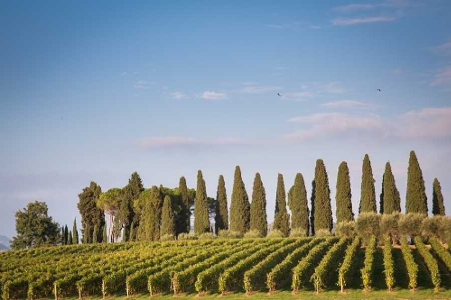VERONALITY Amarone Wine Trail Tour