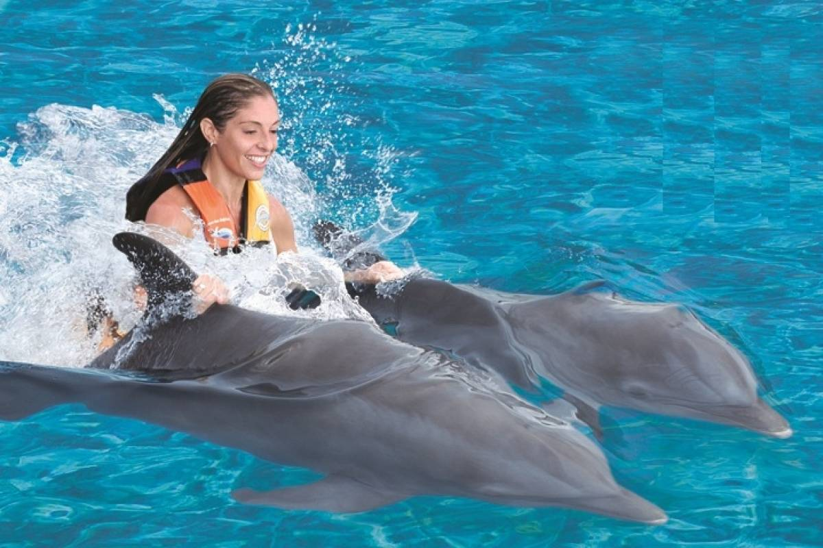 Cancun Vacation Experts NADO CON DELFINES VIP