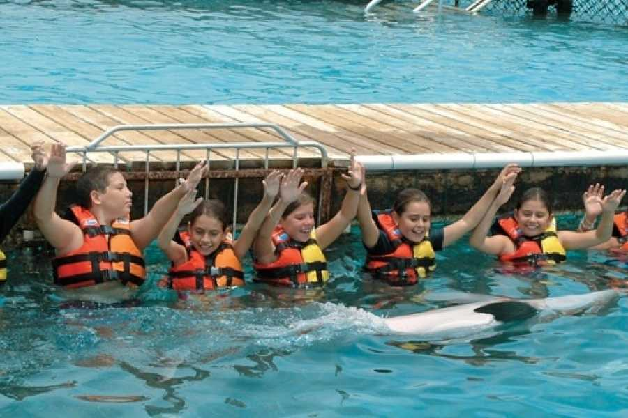 Cancun Vacation Experts VIP SWIM WITH DOLPHINS