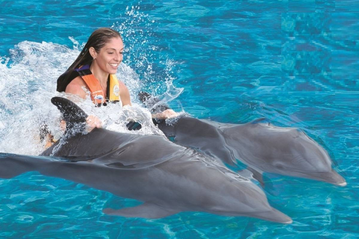 Cancun Vacation Experts MARINE MAMMALS ENCOUNTER