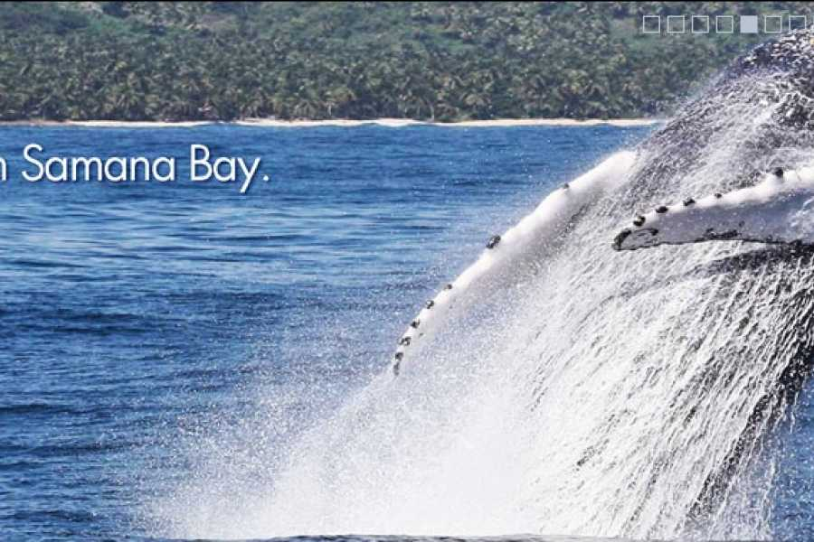 Tour Samana With Terry PUNTA CANA EXCURSION: Humpback Whales+El Limon Waterfalls