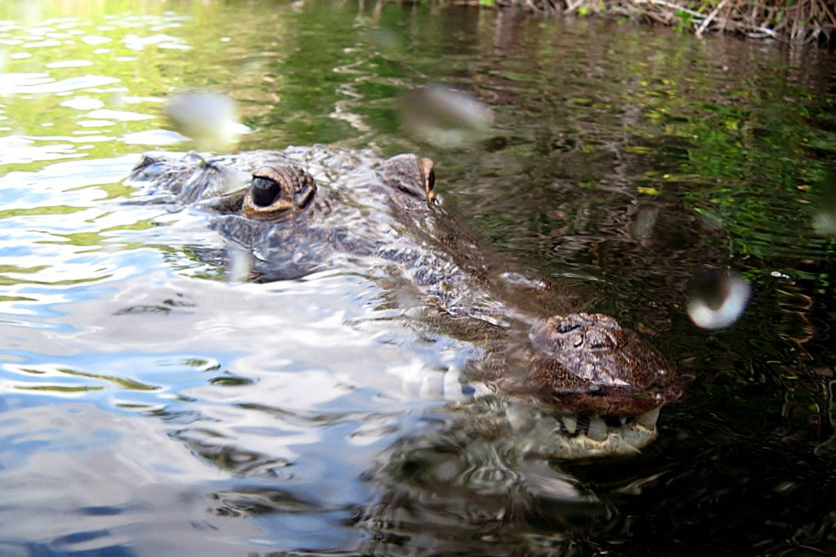 Cancun Vacation Experts CROCODILE EXPERIENCE