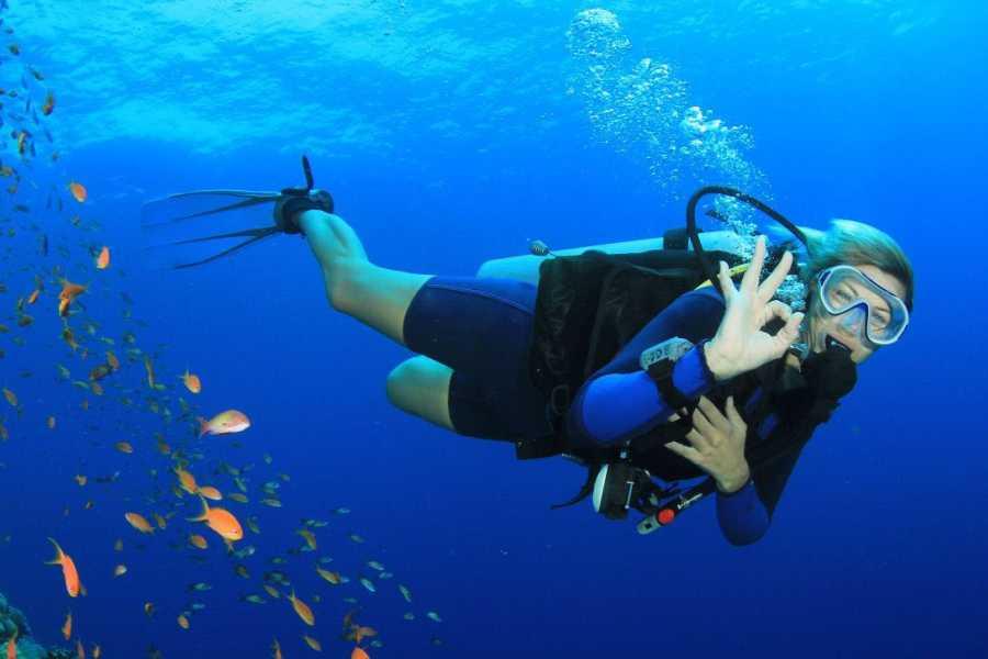 Tours & Tickets Operador Turístico Diving in Veracruz