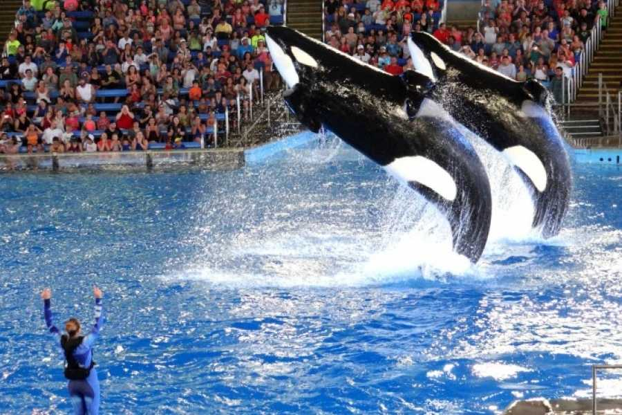 Dream Vacation Builders (SW1) Sea World San Diego + Round Trip Transfer