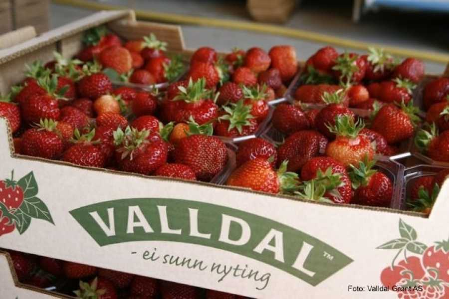 FRAM Round trip from Molde to Valldal, Trollstigen & Åndalsnes