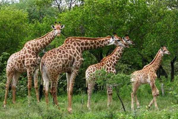 10-Day Kruger National Park & Mozambique - Camping