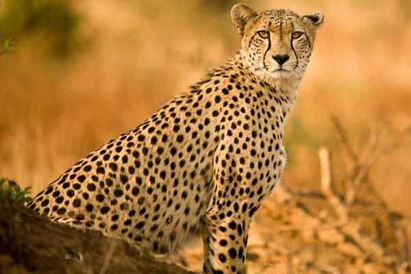 10-Day Kruger National Park & Mozambique - Accommodated
