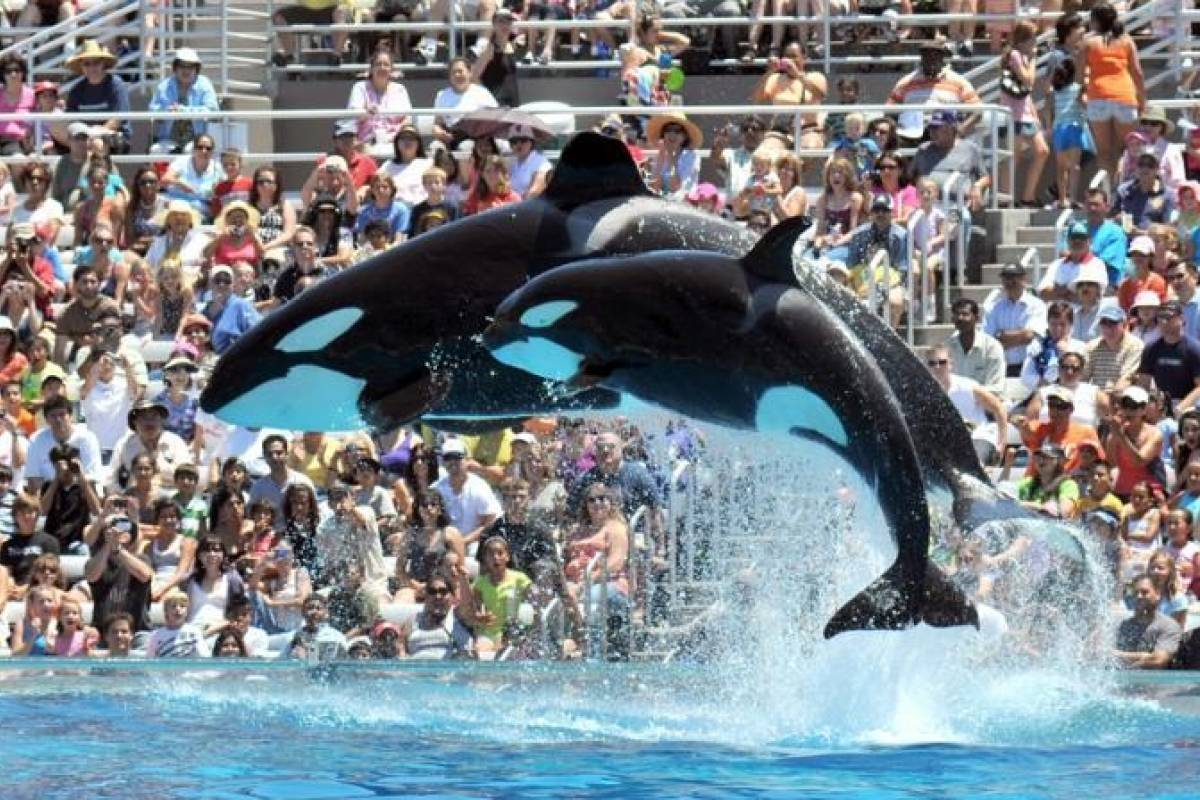 Southern California Ticket & Tour Center 1 Day SeaWorld San Diego Admission
