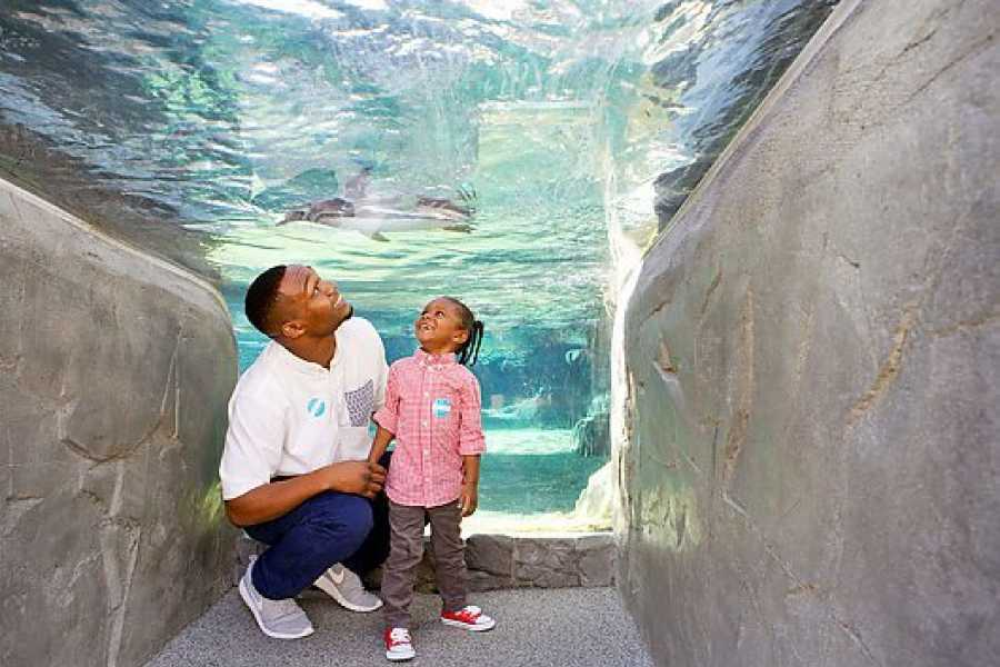 Dream Vacation Builders Aquarium of the Pacific Admission