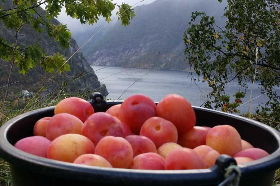 Stana Gard Smak på Hardanger. Hjemmelagd fruktpai.