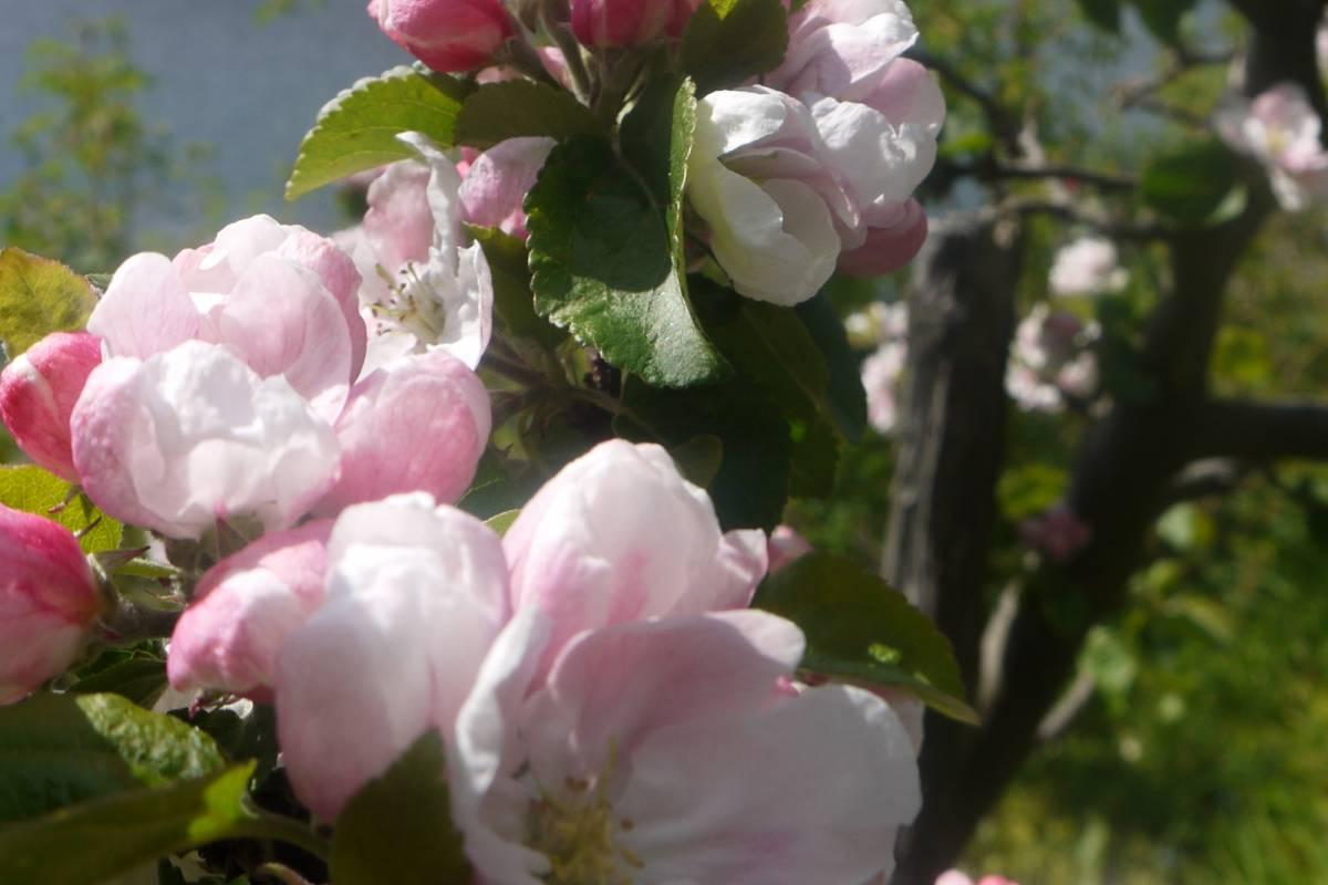Stana Gard Flowers on Stana Gard