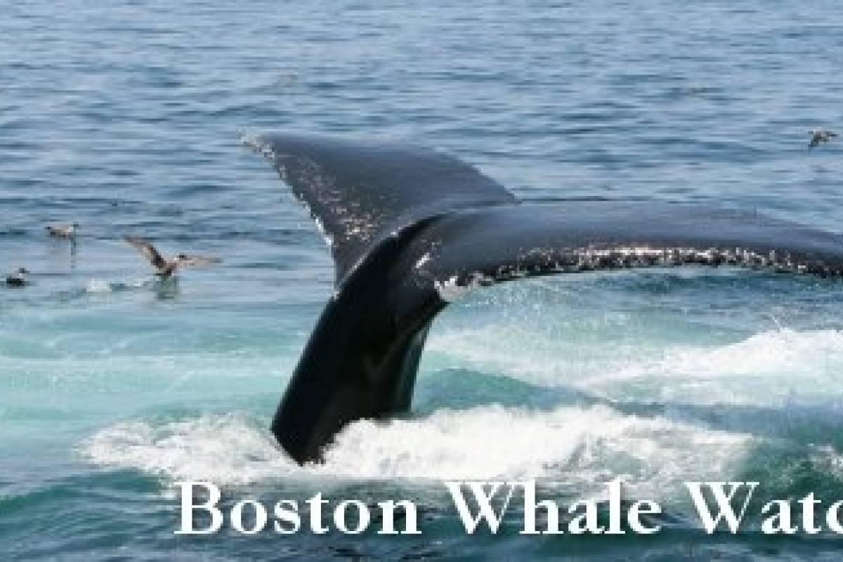 Dream Vacation Builders Boston Go Card